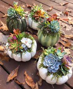 Merge your succulents into fall decor! We love these cute succulent pumpkins by with So so cute. Merge your succulents into fall decor! We love these cute succulent pumpkins by with Succulent Arrangements, Cacti And Succulents, Planting Succulents, Planting Flowers, Succulent Display, Cactus Planta, Cactus Y Suculentas, Garden Care, Succulent Gardening