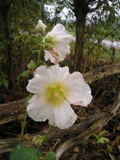 de laatste bloem voor de herfst  Atelier Bep