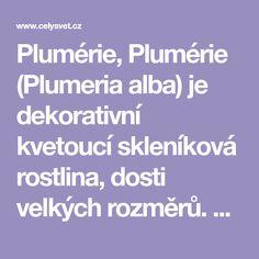Plumérie, Plumérie (Plumeria alba) je dekorativní kvetoucí skleníková rostlina, dosti velkých rozměrů. V domácích podmínkách dosahuje asi 2 metry.