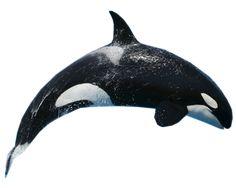 Imagen relacionada Le Morse, Parc A Theme, Killer Whales, Carving, Banner, Clip Art, Printables, Inspire, Sea