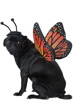 California Costumes Collections Monarch Butterfly Dog Costume Medium * Check this incredible item by mosting likely to the web link at the photo. (This is an affiliate link). Monarch Butterfly Costume, Dog Lion Mane, All Black Cat, California Costumes, Dry Cat Food, Pet Costumes, Halloween Costumes, Big Dogs, Dog Cat