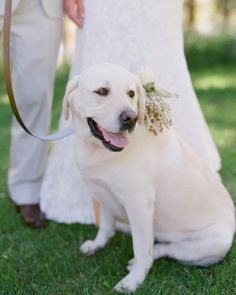 This pup accompanied the groom down the aisle