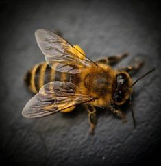 Bee City, Animals And Pets, Cute Animals, I Love Bees, Bees And Wasps, Bee Tattoo, Bugs And Insects, Tier Fotos, Bee Happy