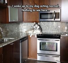 *sigh* yup, I have a husky - this is something only husky people get. ;) Huskies are the Lord Byron's of the dog world - mad, bad and dangerous to know; but we still love and adore them (as they do us).