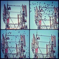 Early morning  .  #birds  #instagood  #ig_myshot #Instagram #photooftheday #follow #photo  #picofheday #beautiful #like #instadaily #followme #followforfollow #likeforlike #follow4follow #like4like #l4l #f4f #tflers #followback #tagsforlikes #follow #hdr #photos #pics #iphone6 #loves_hdr #universal_shotz #master_shots  #hdr_lovers ✨✈️⌚️