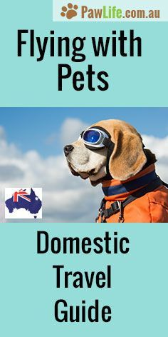 The Flying With Pets Domestic: Australian Domestic Travel Guide will help ease the stress when it comes to organising your pet for flying within Australia. #travel #pettravel #petair #petairtravel #travelingwithpets #flyingwithpets