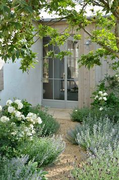 Gravel path to house with soft green plants