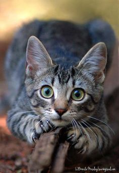 Big beautiful eyes