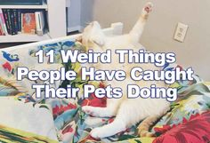 11 Weird Things People Have Caught Their Pets Doing