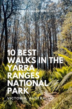 Yarra Ranges National Park | A comprehensive post about the best hikes in the Yarra Ranges, just an hour northeast of Melbourne. From challenging day hikes to pictuesque forest walks, there's a walk in the Yarra Valley to suit everyone. #yarraranges #healesville #victoria #australia #yarravalley #hiking Beautiful Places To Travel, Best Places To Travel, Cool Places To Visit, Places To Go, Melbourne Travel, Australia Travel Guide, New Zealand Travel, Travel Guides, Travel Tips