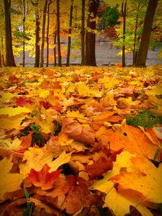 A colorful carpet of autumn leaves...  The Ashtabula River Gulf, Ashtabula Ohio. October 21, 2012