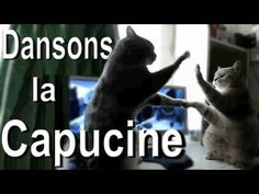 Community: Hilarious French Cat Videos