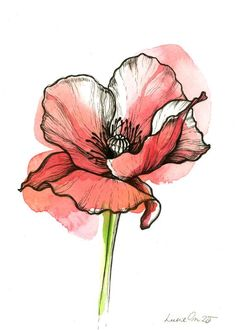 Poppy flower by LucieOn on DeviantArt Watercolor Poppies, Watercolor And Ink, Watercolor Paintings, Watercolor Poppy Tattoo, Poppies Art, Poppies Painting, Flower Art, Poppy Flower Painting, Tulip Flower Drawing