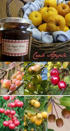 Autumn recipe: Spiced Crab Apple Butter with Cinnamon & Nutmeg. Use as a spread for baked goods or serve with savory pork dishes