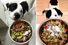 Por uma vida mais saudável: projeto cria receitas culinárias para cães com alimentos de verdade