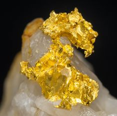 Gold on Quartz - Spain Crystals Minerals, Rocks And Minerals, Stones And Crystals, I Love Gold, Gold Prospecting, Fabre, Coral Stone, Gold Art, White Quartz