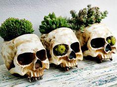 decor, skulls, green thumb, halloween plants, stuff, skull planters, succul, crafti idea, garden
