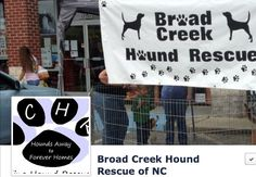 (NC): Broad Creek Hound Rescue New Bern, NC  BCHR1and2@gmail.com