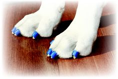 Toegrips in place help Fido get up from the floor. Slippery Floor, Hard Floor, Flooring, Hardwood Floors, Puppy Love, Fur Babies, Puppies, Pet Stuff, Pet Products