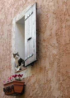 Provence ~ France. hello, hello everybody up here. Can you see me,? I'm enjoying the sunlight and warm day.