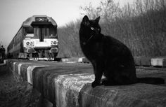 Cat and Train