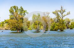 Flooded forest, trees on water, flood disaster.