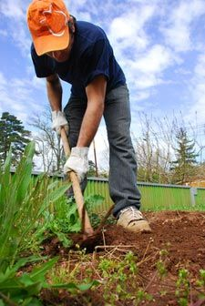 Préparation d'un potager Gardens, Home, Backyard Farming, Plants