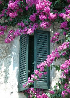 Solve Blossoms and Shutters jigsaw puzzle online with 77 pieces Bougainvillea, Beautiful Flowers, Beautiful Places, Cottage Windows, Balcony Flowers, Window Detail, Through The Window, Window Boxes, Windows And Doors