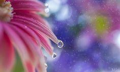 Pastel Rain von Miki Asai auf 500px