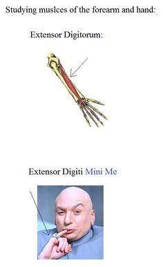 ahhh nerdy anatomy jokes:D