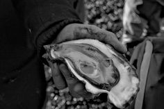 Oysters have always been considered a great delicacy, and some of the best in the world are found in Limfjorden in Denmark.
