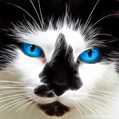 Blue Eyed Bearded Stray-pretty picture even if the blue is enhanced!