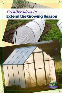 Creative ideas to extend your growing season so you can enjoy healthy homegrown produce year round. #gardening #organicgardening #gardeningtips #vegetablegardening When To Plant Vegetables, Fall Vegetables, Growing Vegetables, Raised Vegetable Gardens, Vegetable Garden Design, Gardening For Beginners, Gardening Tips, Types Of Mulch, Walk In Greenhouse