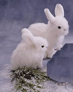 These are REAL snowshoe hare babies.