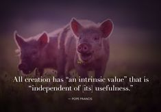 Pope Francis Believes Compassion for Animals Can Help the Environment Curriculum, Suffering Quotes, Pope Francis Quotes, Kindness To Animals, One Green Planet, Abuse Quotes, Nyc, Help The Environment, Vegan Animals