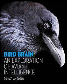 Bird Brain: An Exploration of Avian Intelligence: Amazon.de: Nathan Emery…