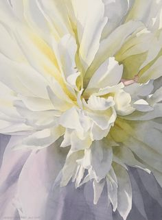 White Peony - watercolor by Robert J. O'Brien