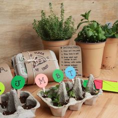 Seed Starter Kit ~ ( great for a bff gifts) - DIY Garten Ideen Garden Projects, Craft Projects, Projects To Try, Garden Ideas, Box Garden, Fun Crafts, Diy And Crafts, Crafts For Kids, Kids Diy