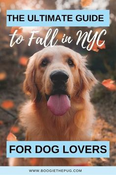 There's nothing like Autumn in New York! Here are the best dog-friendly things to do in New York City this fall. Dog Bucket List, Dog List, Nyc Fall, Autumn In New York, Dog Travel, Travel Usa, Dog Friendly Accommodation, Great Places To Travel, Pet Resort