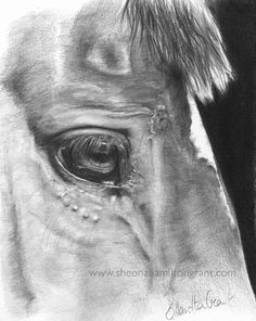 How to Render a Horses Eye in Pencil