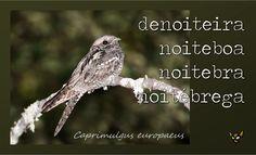 Zarampagalegando: Dicionario visual. Denoiteira