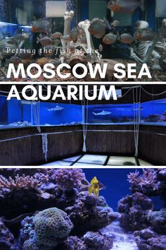 The Moscow Sea Aquarium at Chistye Prudy is a small family friendly fish filled attraction in the centre of Moscow, Russia