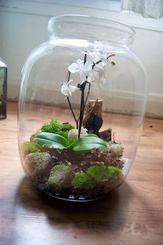 Bonsai Terrarium For Landscaping Miniature Inside The Jars 82 - DecOMG Orchid Terrarium, Mini Terrarium, Succulent Terrarium, Indoor Garden, Garden Plants, Indoor Plants, Orchid Care, Plant Care, Ikebana