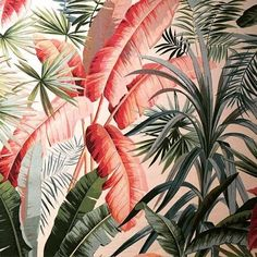 This is listed as being from a Pierre Frey exhibition at the Musée D'art Décoratif in Paris. Looks like a very French wallpaper design from the early Would love to know more. Art Tropical, Motif Tropical, Tropical Pattern, Tropical Leaves, Tropical Fabric, Tropical Interior, Tropical Prints, Tropical Design, Deco Floral