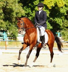 18-year-old imported Polish Arabian stallion *EMPRES (Monogramm x Empressa) earned a whopping 86.46% in Training Level at an open dressage show, earning a Championship and a Reserve at First Level!