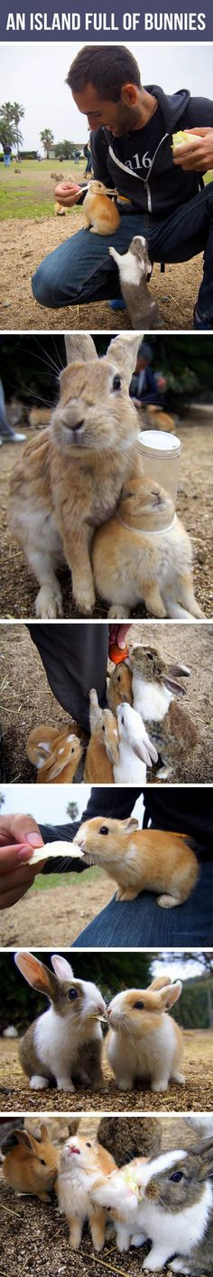 An Island Full of Bunnies - Does this REALLY exist?! I must know! I must go!