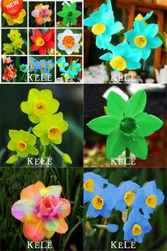 [Visit to Buy] Big Promotion!Narcissus Flower Daffodil Seeds Absorption Radiation Narcissus Tazetta Seeds Flowers for Rooms,100 PCS/Bag,#1LDH92 #Advertisement