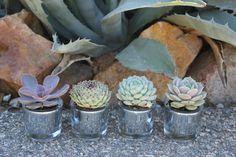 Succulents make great party favors! Succulent Wedding Favors, Vintage Glam, Party Favors, Bridal Shower, Succulents, Dream Wedding, Creative, Plants, Beautiful
