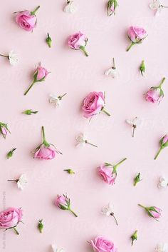 Rosebud and blossom background by Ruth Black for Stocksy United