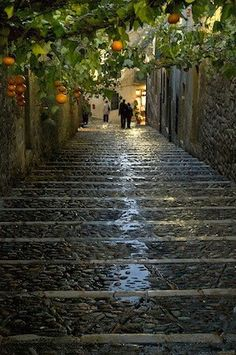 Temps de Flors. Girona. Spain.